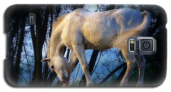 White Horse In The Early Evening Mist Galaxy S5 Case by Nick  Biemans