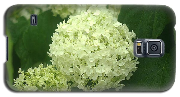 Galaxy S5 Case featuring the photograph White Hydrangea Blossoms by Suzanne Powers