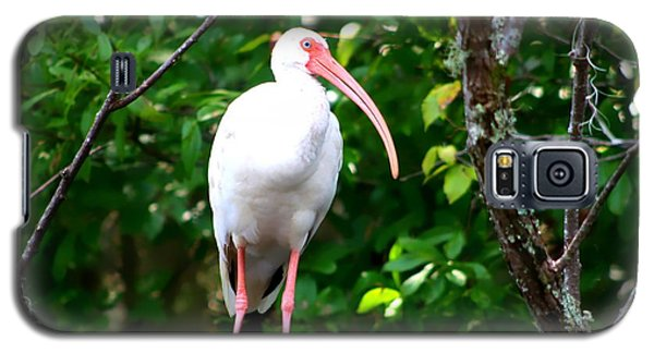 Galaxy S5 Case featuring the photograph White Ibis by Debra Forand