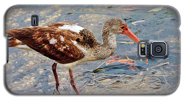 White Ibis Juvenile Galaxy S5 Case