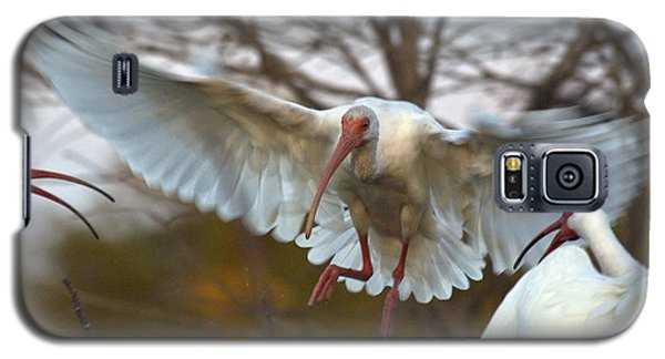 White Ibis Galaxy S5 Case by Mark Newman