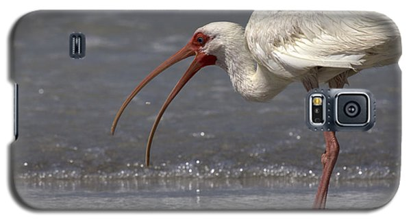 Galaxy S5 Case featuring the photograph White Ibis On The Beach by Meg Rousher