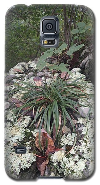 Galaxy S5 Case featuring the photograph White Lichen by Robert Nickologianis