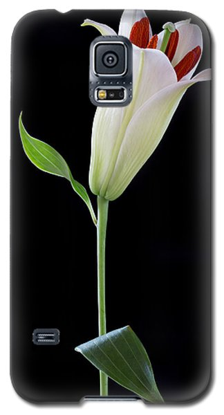 White Lily Bud Galaxy S5 Case