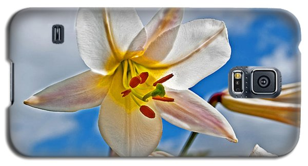 White Lily Flower Against Blue Sky Art Prints Galaxy S5 Case