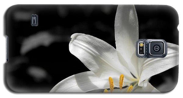 White Lily With Yellow Stamens Against Dark Background Galaxy S5 Case
