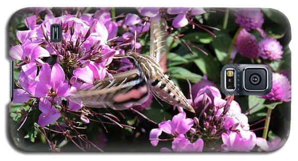 White-lined Sphinx Moth Galaxy S5 Case by Teresa Schomig