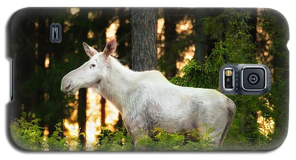 Galaxy S5 Case featuring the photograph White Moose In Sunset by Rose-Maries Pictures