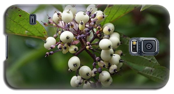 Galaxy S5 Case featuring the photograph White Mountain Berries by Amanda Holmes Tzafrir