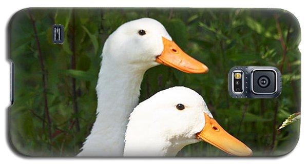 White Pekin Duck Galaxy S5 Case