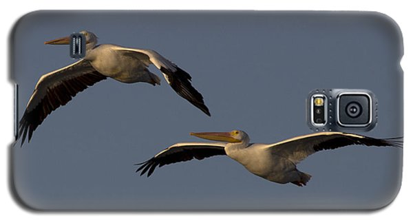 Galaxy S5 Case featuring the photograph White Pelican Photograph by Meg Rousher