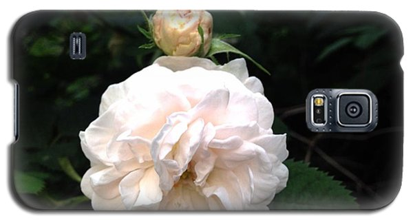 White Rose And Bud Galaxy S5 Case