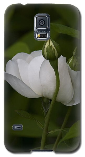 White Rose With Buds Galaxy S5 Case