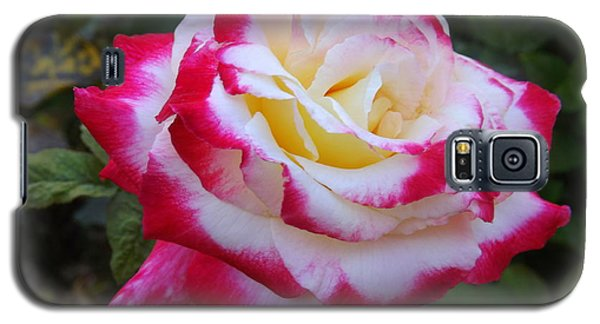 White Rose With Pink Texture Hybrid Galaxy S5 Case