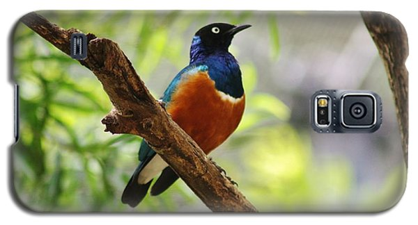 Galaxy S5 Case featuring the photograph White-rumped Shama by Craig Wood