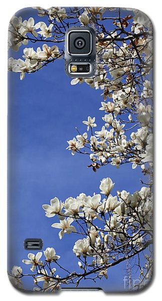 Saucer Magnolia Galaxy S5 Case - White Saucer Magnolia With Blue Sky by Carol Groenen