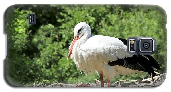 Galaxy S5 Case featuring the photograph White Stork  by Teresa Zieba