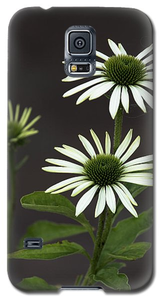 White Swans Galaxy S5 Case