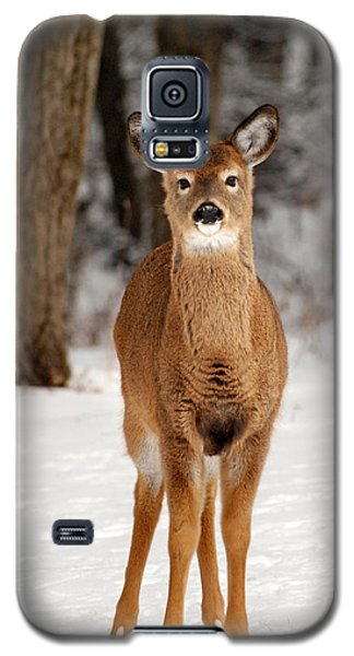 Whitetail In Snow Galaxy S5 Case by Christina Rollo