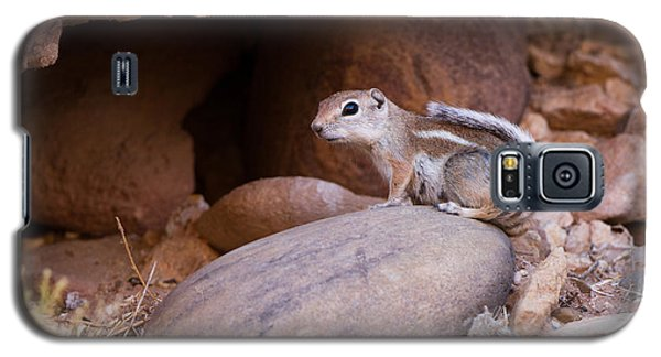 White-tailed Antelope Squirrel Galaxy S5 Case