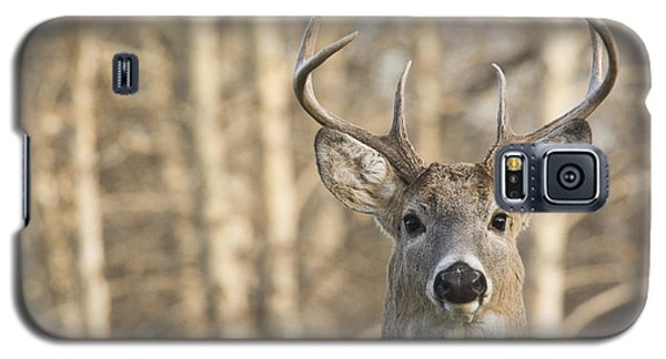 White-tailed Buck Galaxy S5 Case