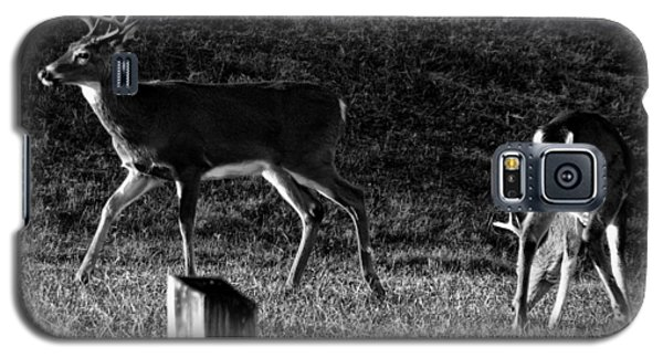 White Tailed Deer Galaxy S5 Case by Chris Flees