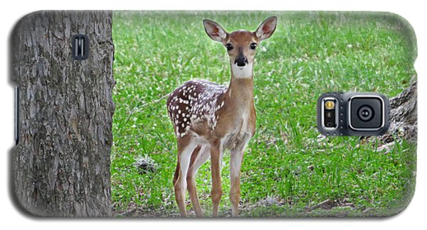 White-tailed Fawn - Face Of Innocence Galaxy S5 Case