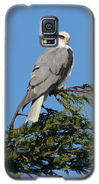 Galaxy S5 Case featuring the photograph White-tailed Kite Perching by Bob and Jan Shriner