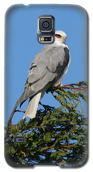 White-tailed Kite Perching Galaxy S5 Case