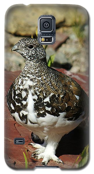 Galaxy S5 Case featuring the photograph White-tailed Ptarmigan by Sue Smith