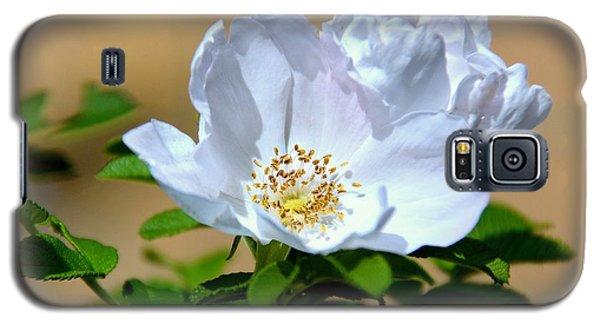 White Tea Rose Galaxy S5 Case by Lisa L Silva