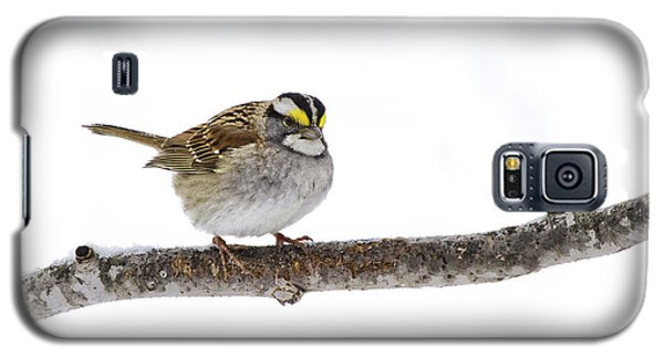 White-throated Sparrow Galaxy S5 Case