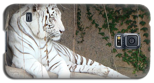 Galaxy S5 Case featuring the photograph White Tiger Resting by Phyllis Beiser