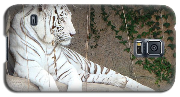 White Tiger Resting Galaxy S5 Case