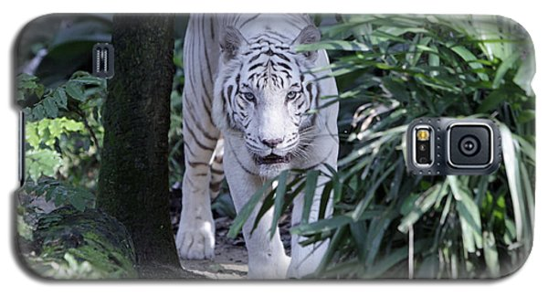 Galaxy S5 Case featuring the photograph White Tiger  by Shoal Hollingsworth