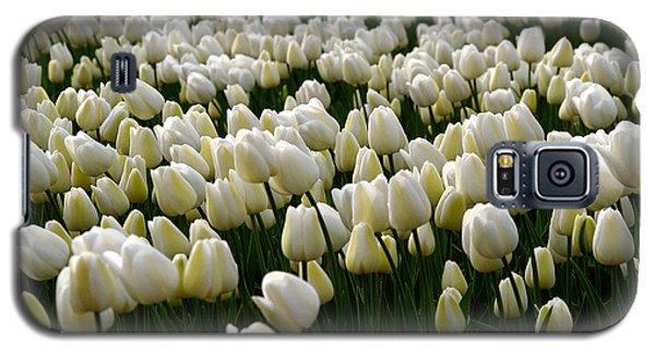 White Tulip Field  Galaxy S5 Case
