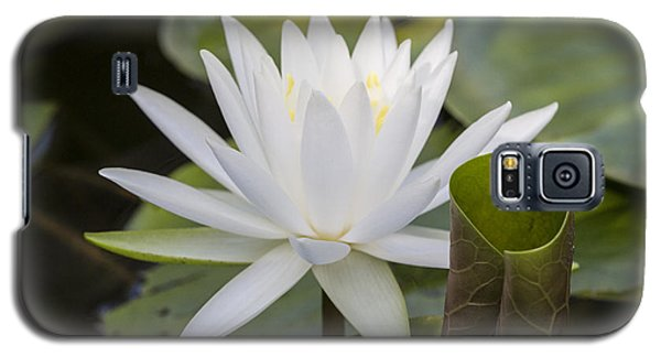 White Water Lily With Curiously Scrolled Leaf Galaxy S5 Case