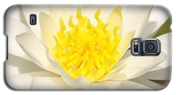 Galaxy S5 Case featuring the photograph White Waterlily by Olivia Hardwicke