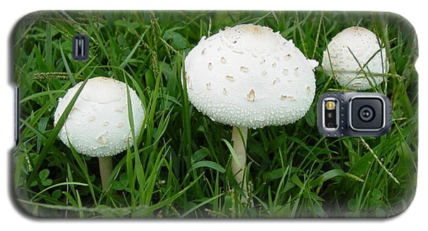 Galaxy S5 Case featuring the photograph White Wild Mushrooms by Dorothy Maier