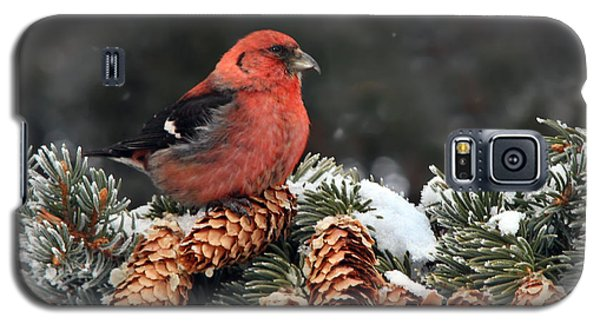 White-winged Crossbill Galaxy S5 Case by Nick  Saunders