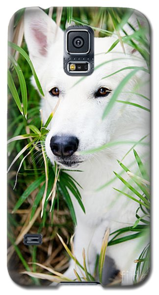 Galaxy S5 Case featuring the photograph White Wolf by Erika Weber