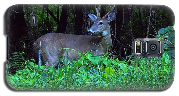 Whitetail Buck 015 Galaxy S5 Case by Chris Mercer