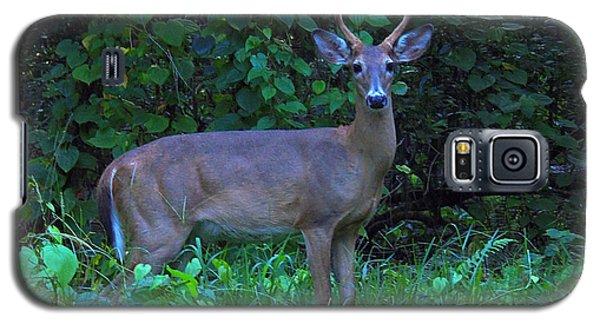 Whitetail Buck 029 Galaxy S5 Case by Chris Mercer