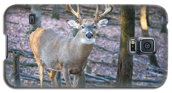 Whitetail Buck Galaxy S5 Case