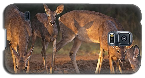 Whitetail Deer At Waterhole Texas Galaxy S5 Case