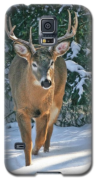 Whitetail Deer Eight Point Galaxy S5 Case