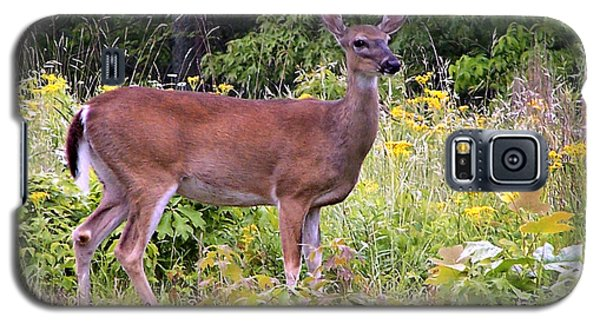 Galaxy S5 Case featuring the photograph Whitetail Deer by William Tanneberger