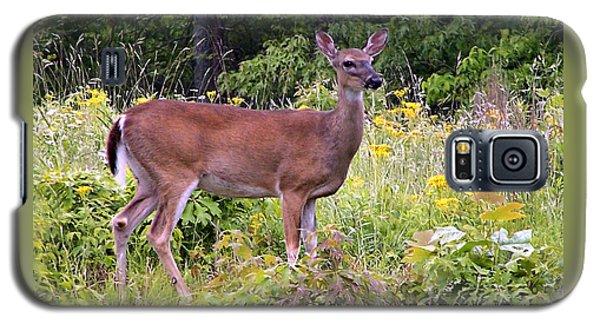 Whitetail Deer Galaxy S5 Case