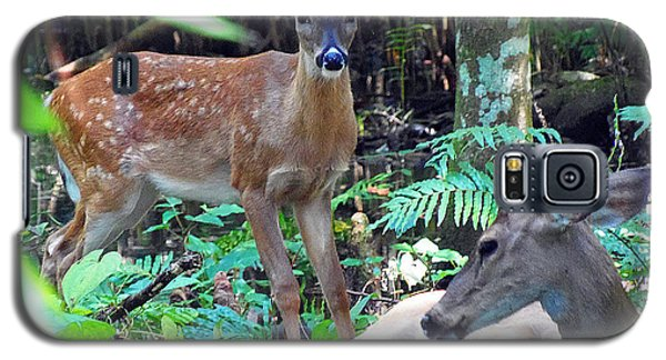 Whitetail Fawn 013 Galaxy S5 Case by Chris Mercer