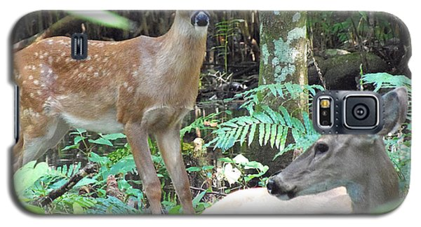 Whitetail Fawn 014 Galaxy S5 Case by Chris Mercer